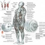 Анатомия становой тяги с классическом варианте