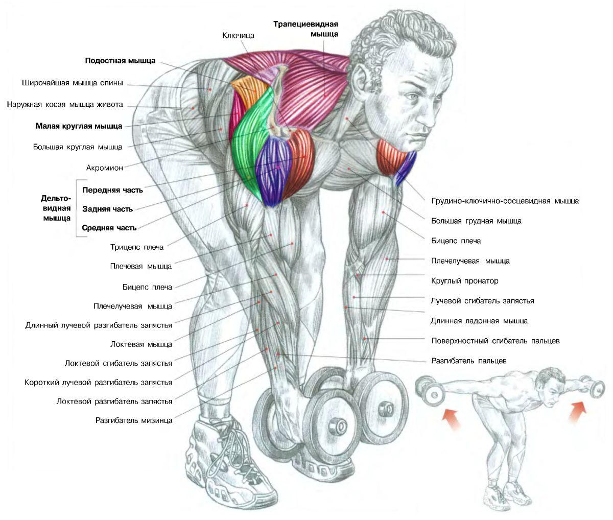 Как правильно набрать и нарастить мышечную массу 24
