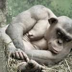 Бицепс обезьяны