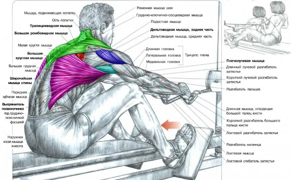 Как накачать большую спину в домашних условиях