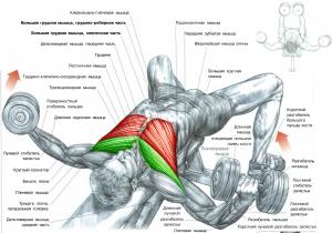 Упражнение на грудь Разведение гантелей лежа