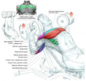 Тренировка верха груди Жим гантелей лежа на наклонной скамье