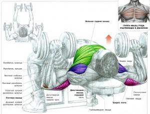 Тренировка грудных мышц Жим гантелей Бодибилдинг