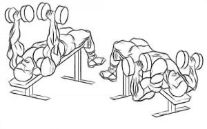 Жим гантелей лежа на наклонной скамье вниз головой. тренировка нижнего отдела грудных мышц.
