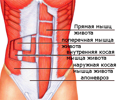 жир на косых мышцах живота