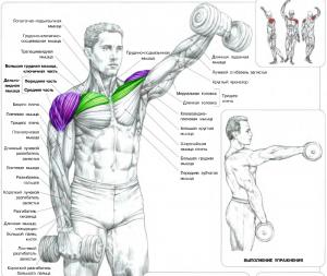Подъемы гантелей перед собой Тренировка Дельтовидных мышц Анатомия физических упражнений Бодибилдинг