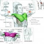 Сведения локтей в тренажере бабочка Тренеровка больших грудных мышц Анатомия силовых упражнений