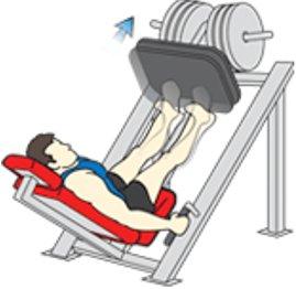 calf raises leg press machine