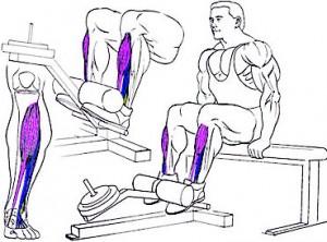 Как накачать мышцы голени, подъемы носков