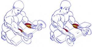 Сгибания запястий, упражнение для тренировки мышц предплечий, развитие силы хвата
