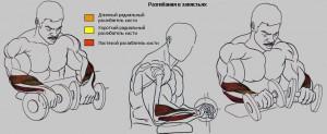 Разгибания кистей с гантелями, тренируем мышцы предплечья, бодибилдинг