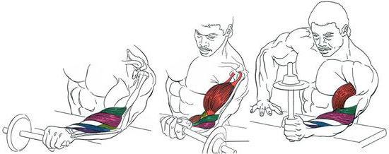 Пронация и супинация, анатомия предплечий, тренировка мышц предплечий