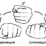 Пронация - супинация, поворот кисти, тренировка мышц предплечий