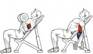 Подъемы гантелей на наклонной скамье, тренировка бицепсов