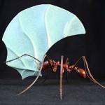 Муравей, одно из самых сильных насекомых